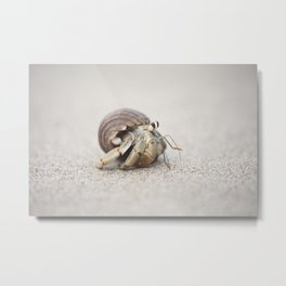 Life & times of a Hermit Crab Metal Print