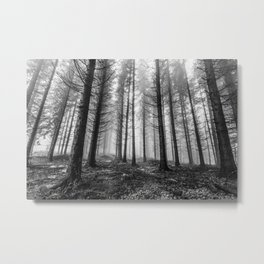 Winter forest trees #11 - Black and white Metal Print