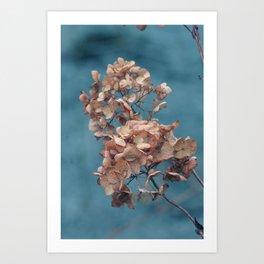 Dried Beauty Art Print