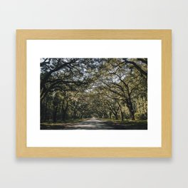 Wormsloe Live Oak Avenue - Savannah II Framed Art Print