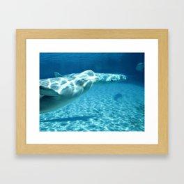 Ocean Blue Beluga Pairs Version 1 Framed Art Print