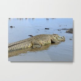 African Nile Crocodile, Wildlife, Ethiopia, Africa Metal Print