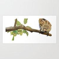 sparrow Art Prints featuring sparrow by Alessandra Razzi Illustrazioni