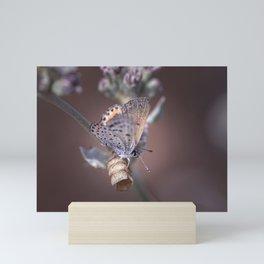 Butterfly III Mini Art Print