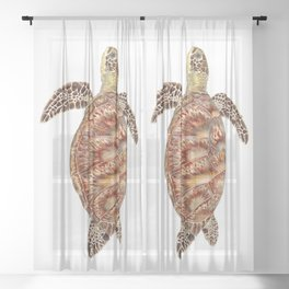 Green turtle Chelonia mydas Sheer Curtain