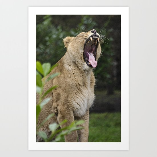 A Roaring Momment  Art Print