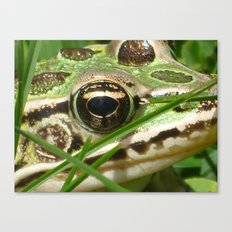 Northern Leopard Frog Canvas Print