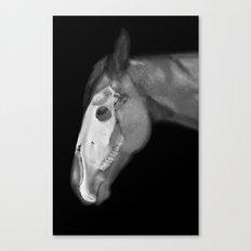 Equine Anatomy Canvas Print
