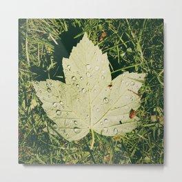 rain water droplets on sycamore leaf Metal Print