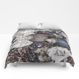 Periwinkles and Barnacles on a rock Comforters