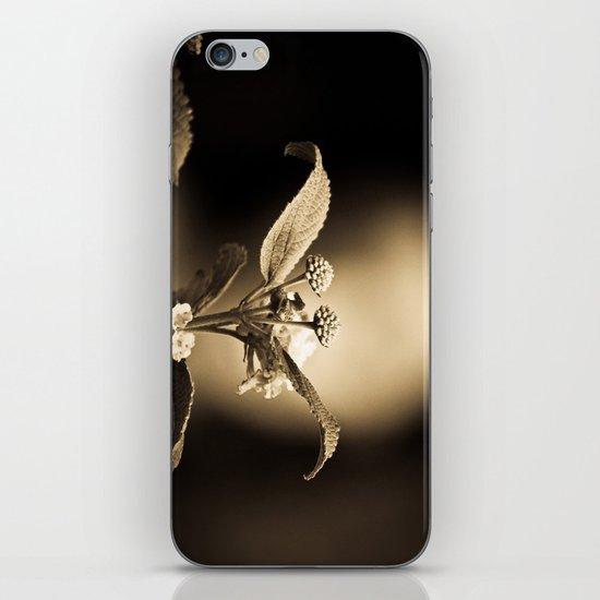 Venus in Flowers iPhone & iPod Skin