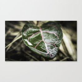 Plant of Art Canvas Print