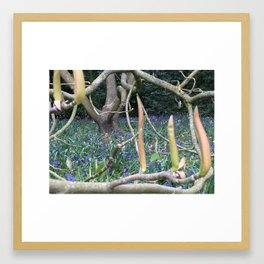 Spring comes to Kenwood Framed Art Print