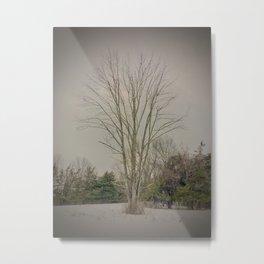 Oak Tree in Winter Metal Print