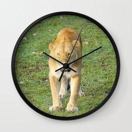 Extraordinary Animals - Lioness Wall Clock