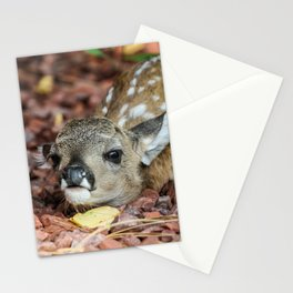 Pine Fawn Stationery Cards