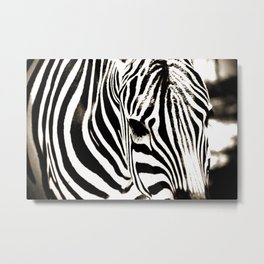 Zebra-Black and White Metal Print