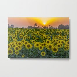 Tropical Sunset with Palms and Sunflowers color landscape photography / photograph / photographs wall decor Metal Print