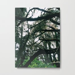 Spider Web Trees Metal Print