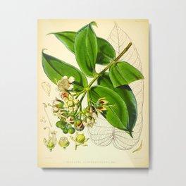 Vintage Illustration Botanical Scientific Illustration Himalayan Plants Metal Print