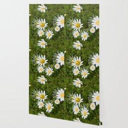 Daisies in a Blur Wallpaper