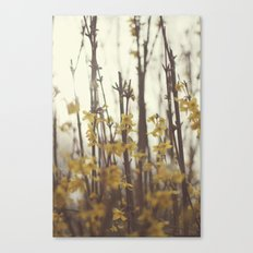 Golden Bells Canvas Print