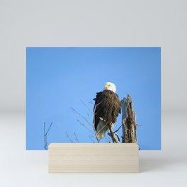 Bald Eagle - Closeup in Tree Mini Art Print