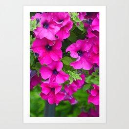 Beautiful pink petunias Art Print