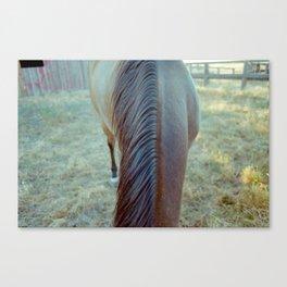 Horse Mane Canvas Print