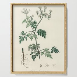 Poison parsley (Aethusa cynapium)  from Medical Botany (1836) by John Stephenson and James Morss Chu Serving Tray