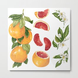 Blooming pomelo with fruits Metal Print