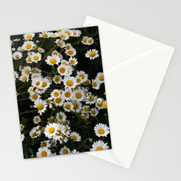 Daisies in groups at sunset Stationery Cards