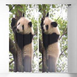 Chongqing Baby Giant Panda | Bébé Panda géant Blackout Curtain