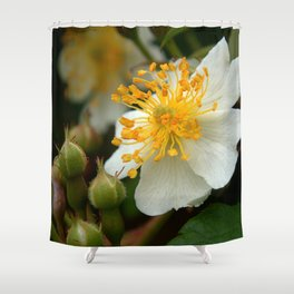 Flower AA Shower Curtain