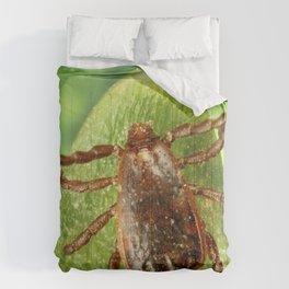 A male brown dog tick Rhipicephalus sanguineus Comforters