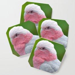Beautiful Rose Breasted Cockatoo Coaster