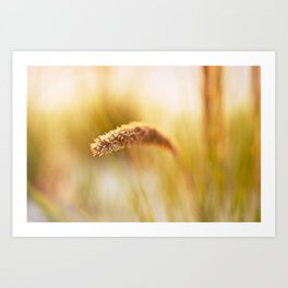 Summer Seeds Art Print