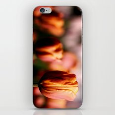 Colorful spring tulips iPhone & iPod Skin