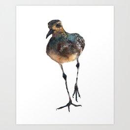 Bird Painting, plover watercolor Art Print