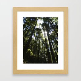 Towering Trees Framed Art Print