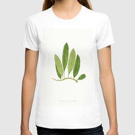 Edward Joseph Lowe - Polypodium Squamulosum T-shirt