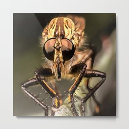 Robber Fly Profile Asildae Close Up Metal Print