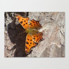 Butterfly 2016 X Canvas Print