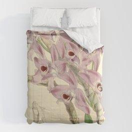 Dendrobium parishii Comforters
