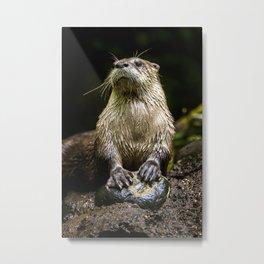 Otter Paws, Otter Prints, Cute Otter Art, Otter Pillow, Otter Gifts,Animal Art, Large animal Canvas Metal Print
