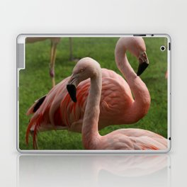 Real flamingos with scary eyes Laptop & iPad Skin