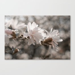 Magnolia Dreaming Canvas Print