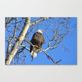 Wintertime Baldy Canvas Print