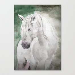 Cathy's white horse Canvas Print