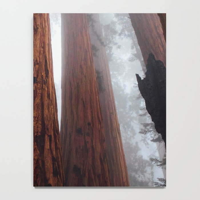 Woodley Forest Notebook